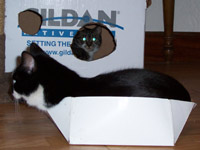 Jacko and Martini (in box)